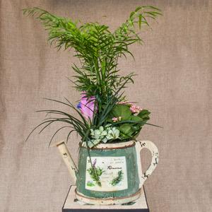Regadera con plantas