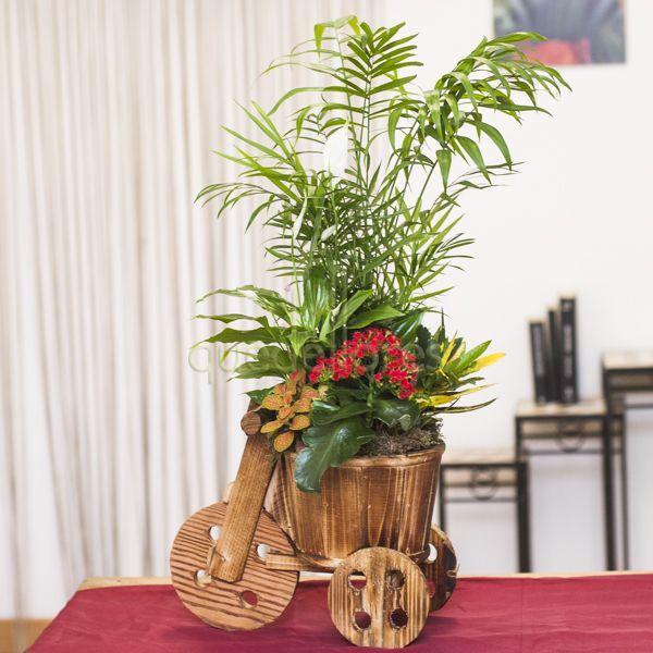 Triciclo de plantas