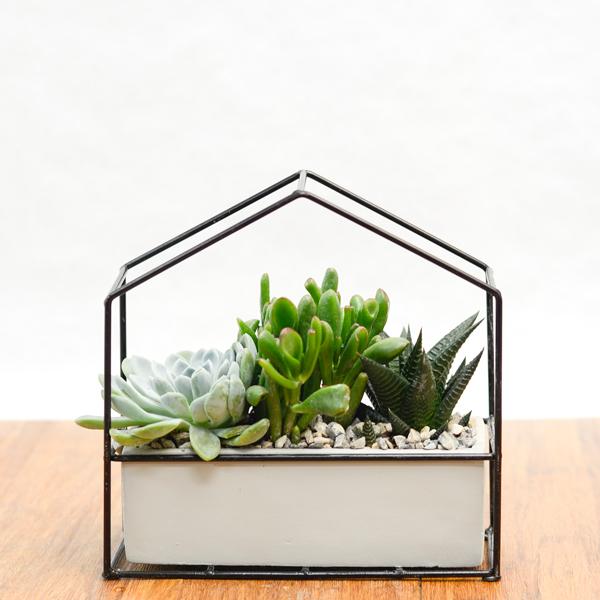 Invernadero de plantas crasas