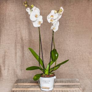 Orquídea en cubo