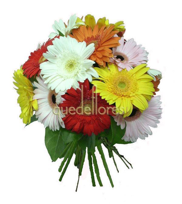 Gerberas multicolor en el Club QDF