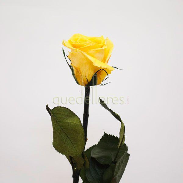 Rosa amarilla liofilizada.