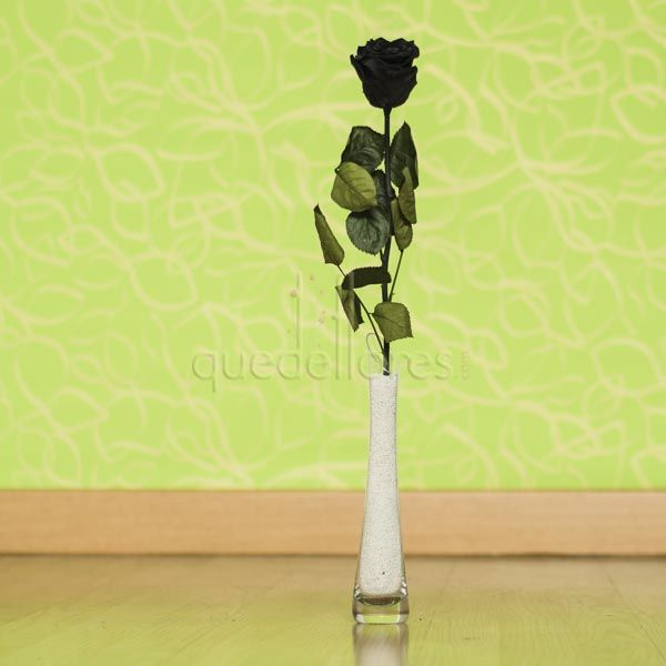 Violetero rosa negra liofilizada