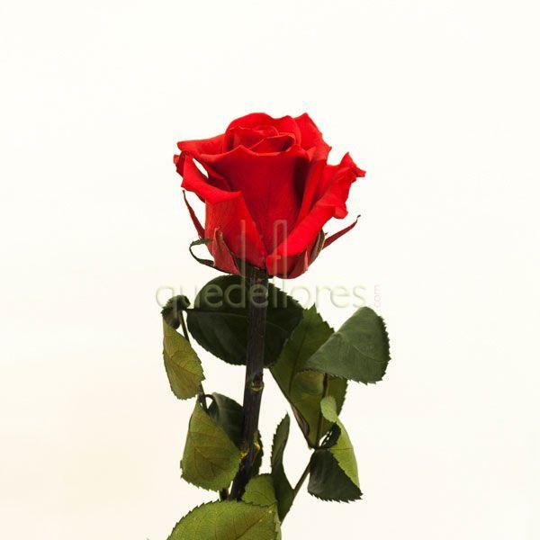 Rosa Roja liofilizada.