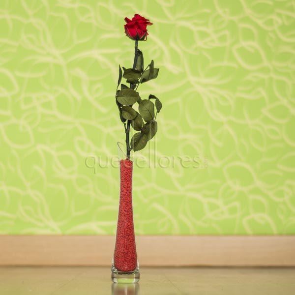 Violetero rosa roja liofilizada
