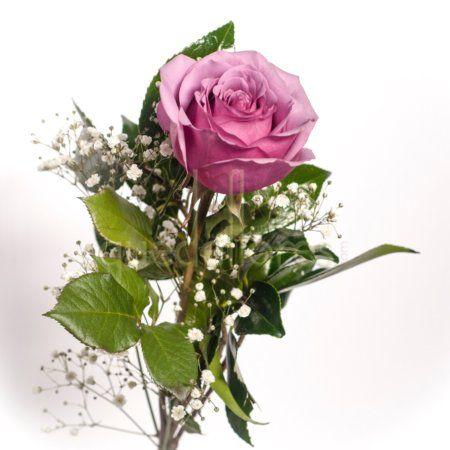 Rosa morada especial Día de la Mujer