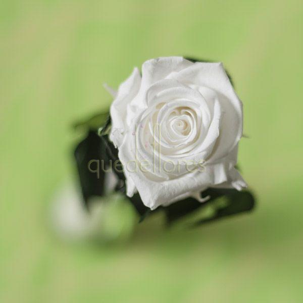 Vistoso Uñas De Color Rosa Blanca Ilustración - Ideas Para Esmaltes ...