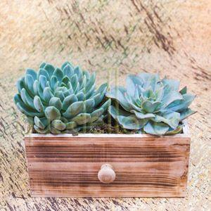 Cajón dos Plantas Crasas
