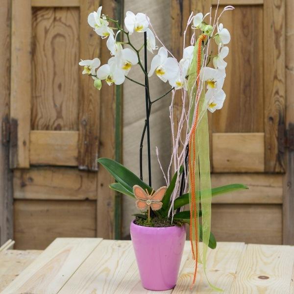 Orquídea Yellow Snowflake