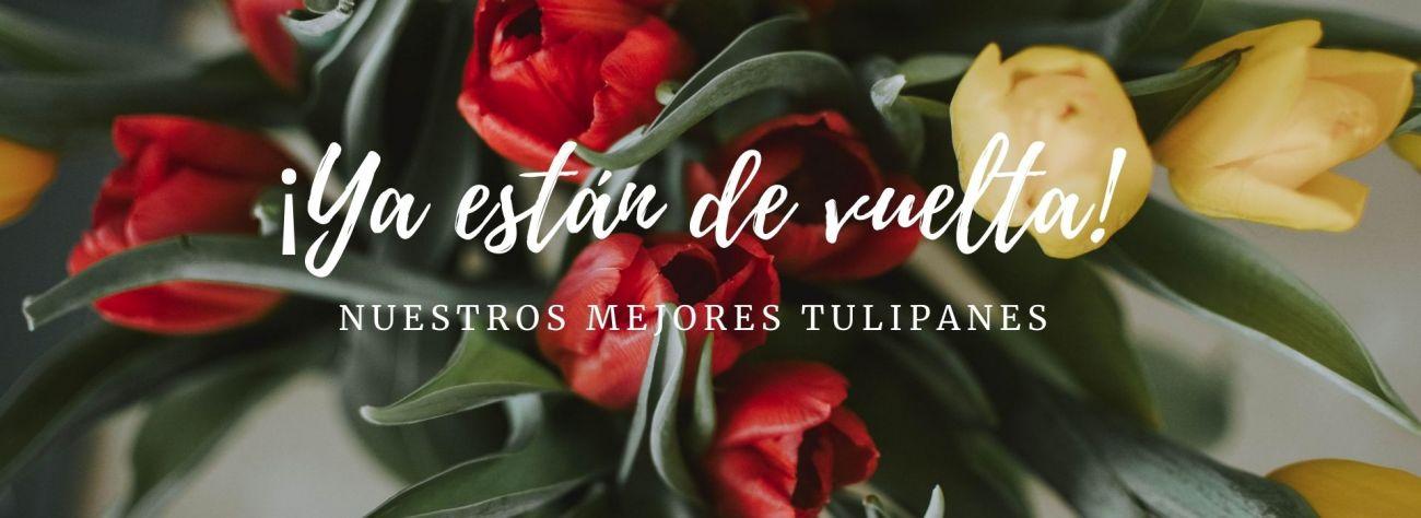 El tulipan esta de vuelta